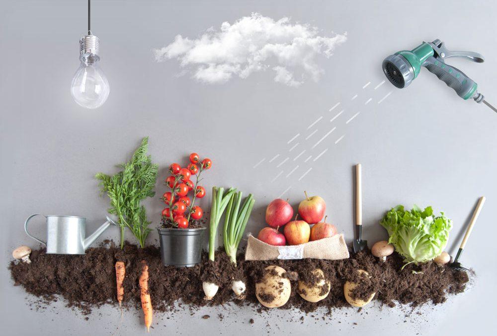 野菜の仕入れ価格が乱高下。店舗がやるべき対応策と現状について