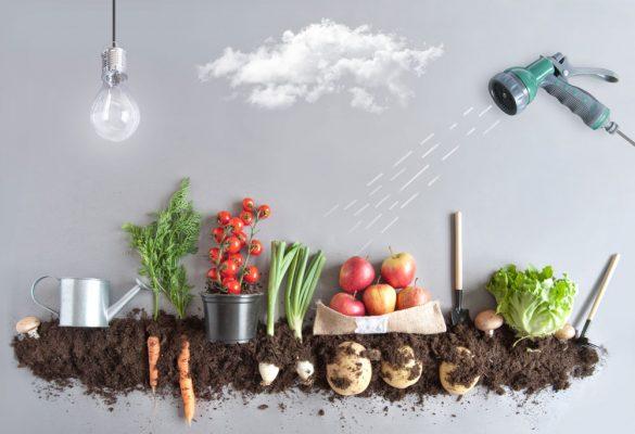 野菜の仕入れ価格が乱高下。店舗がやるべき対応